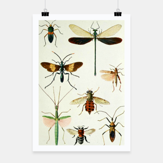 Fashion art of a illustration from a Encyclopedia about Insects Poster Bild der Miniatur