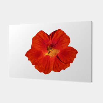 Miniaturka Cute Orange Flower Photo Canvas, Live Heroes