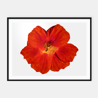 Miniaturka Cute Orange Flower Photo Framed poster, Live Heroes