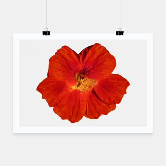 Miniaturka Cute Orange Flower Photo Poster, Live Heroes