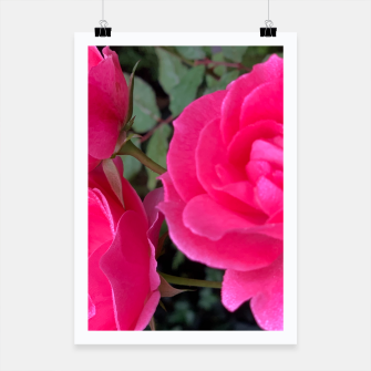 Thumbnail image of Roses, Live Heroes