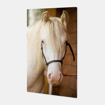 Thumbnail image of White horse #4 Canvas, Live Heroes
