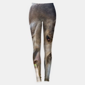 Thumbnail image of Colour horse Legginsy, Live Heroes