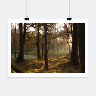 Thumbnail image of sunny forest Plakat, Live Heroes