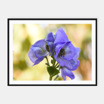 Thumbnail image of autumn blue flower Plakaty w ramie , Live Heroes
