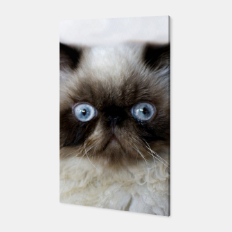 Thumbnail image of Funny Cat Canvas, Live Heroes