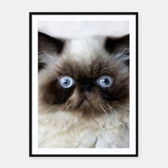 Thumbnail image of Funny Cat Framed poster, Live Heroes