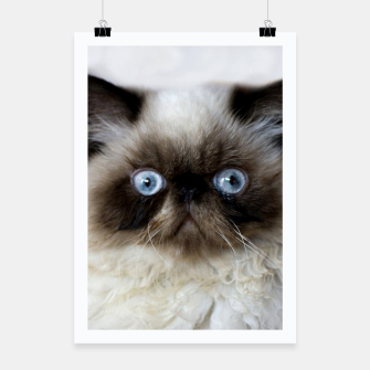 Thumbnail image of Funny Cat Poster, Live Heroes