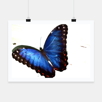 Thumbnail image of Blue morpho butterfly , Live Heroes