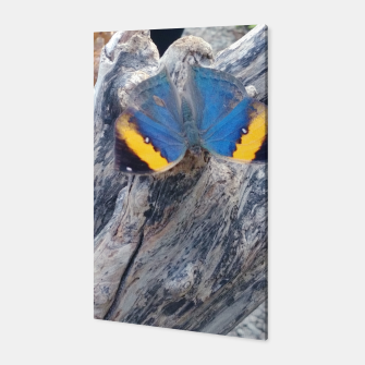 Miniatur amazing butterfly Canvas, Live Heroes