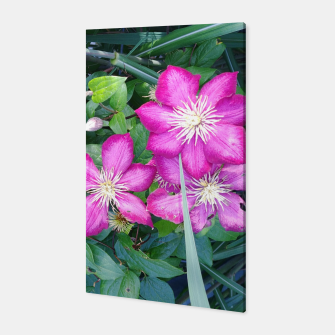 Thumbnail image of pink clematis Canvas, Live Heroes