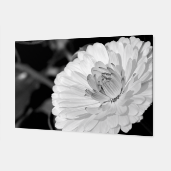 Miniatur White blossoming chrysanth, black and white flower photography Canvas, Live Heroes