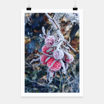 frozen rose Plakat miniature