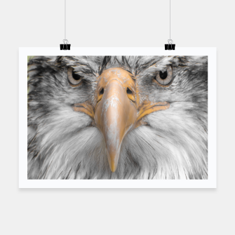 Thumbnail image of zappwaits Eagle Poster, Live Heroes