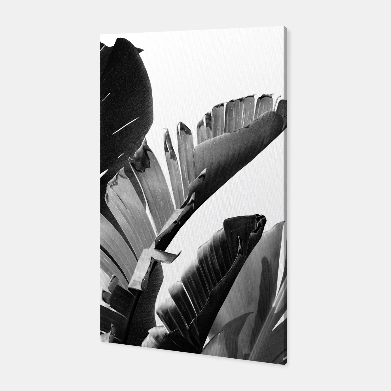 Image of Banana Leaves Finesse #2 #tropical #decor #art Canvas - Live Heroes