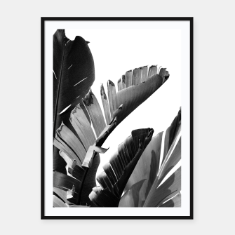 Banana Leaves Finesse #2 #tropical #decor #art Plakat mit rahmen obraz miniatury