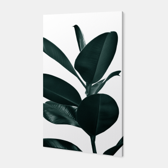 Ficus Finesse #1 #tropical #decor #art  Canvas obraz miniatury