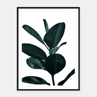 Ficus Finesse #1 #tropical #decor #art  Plakat mit rahmen obraz miniatury