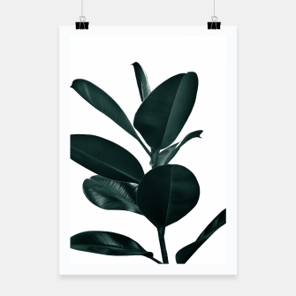 Ficus Finesse #1 #tropical #decor #art  Plakat obraz miniatury