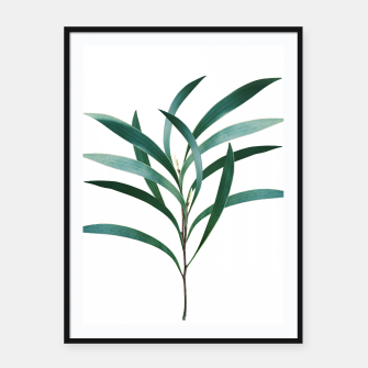 Thumbnail image of Eucalyptus Branch Delight #1 #foliage #decor #art Plakat mit rahmen, Live Heroes