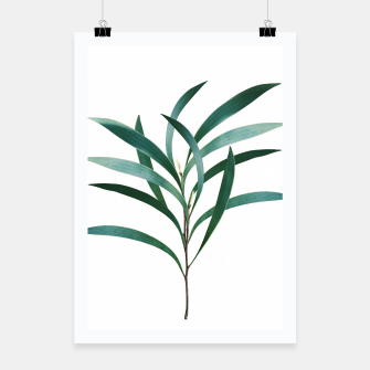 Miniatur Eucalyptus Branch Delight #1 #foliage #decor #art Plakat, Live Heroes
