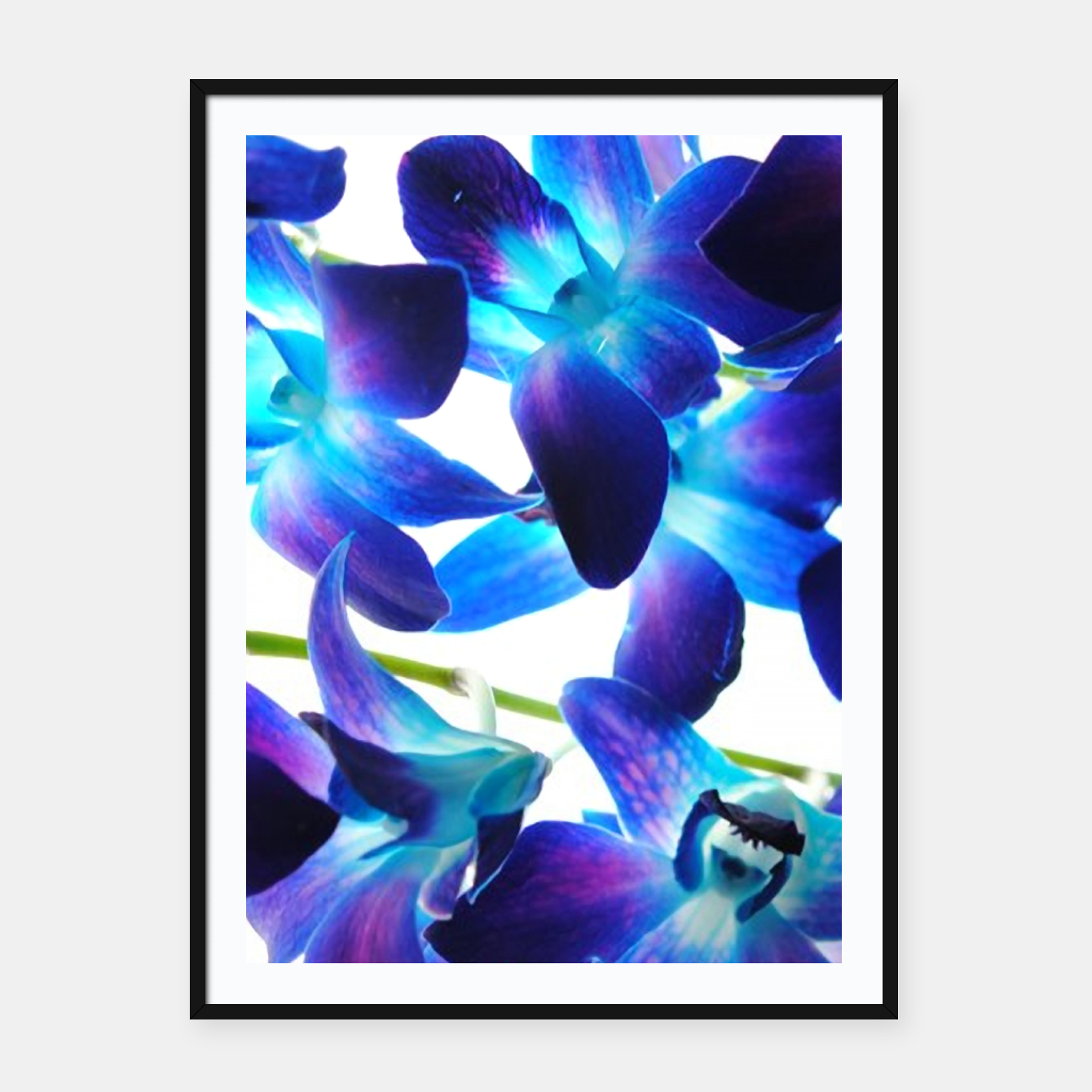 Image of Purple  Orchids Framed poster - Live Heroes