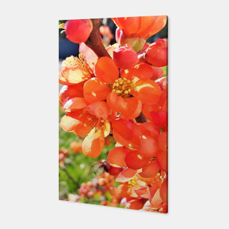 Thumbnail image of blooming quince Canvas, Live Heroes