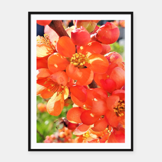 Thumbnail image of blooming quince Plakaty w ramie , Live Heroes