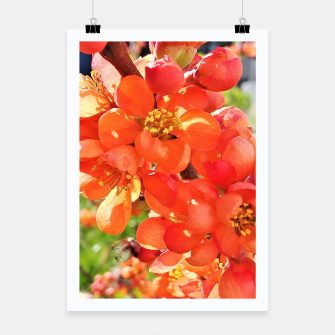 Thumbnail image of blooming quince Plakat, Live Heroes