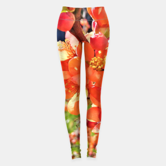 Thumbnail image of blooming quince Legginsy, Live Heroes