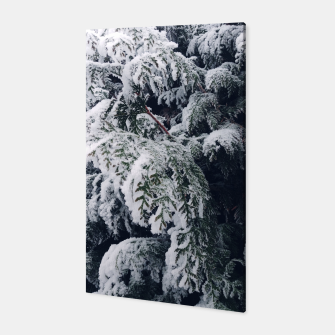Thumbnail image of thuja brabant in the snow Canvas, Live Heroes