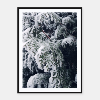 Thumbnail image of thuja brabant in the snow Plakaty w ramie , Live Heroes