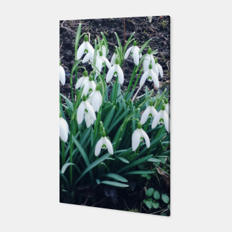 Thumbnail image of snowdrops Canvas, Live Heroes