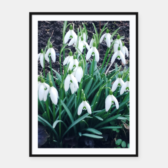 Thumbnail image of snowdrops Plakaty w ramie , Live Heroes