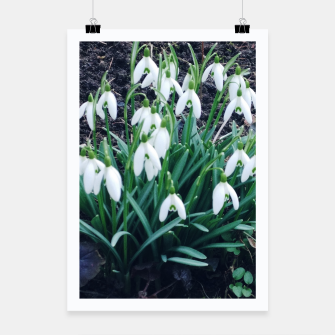 Thumbnail image of snowdrops Plakat, Live Heroes