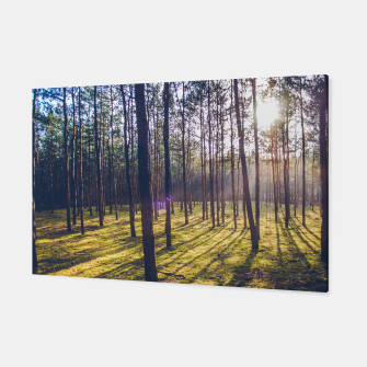 Thumbnail image of forest sun Canvas, Live Heroes