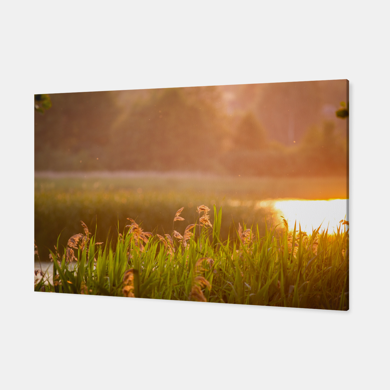 Image of Narew sunset Canvas - Live Heroes