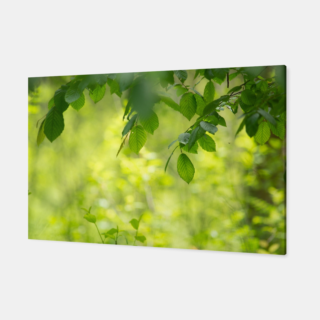 Image of Spring leafs Canvas - Live Heroes