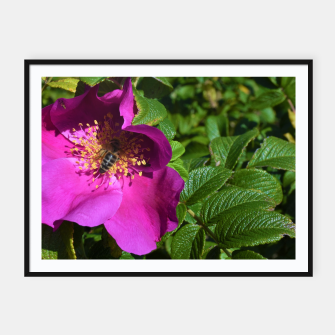 Thumbnail image of  wild rose with bee Plakaty w ramie , Live Heroes