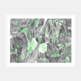 Thumbnail image of botanical coleus leaves camouflage art 3/3 ( gray green ) Framed poster, Live Heroes