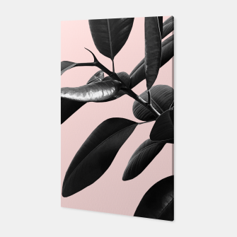 Thumbnail image of Ficus Elastica Blush Black & White Vibes #1 #foliage #decor #art  Canvas, Live Heroes