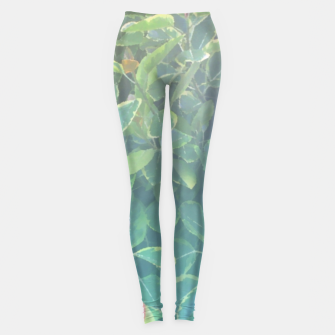 Thumbnail image of foliage_ficus benghalensis variegated Leggings, Live Heroes