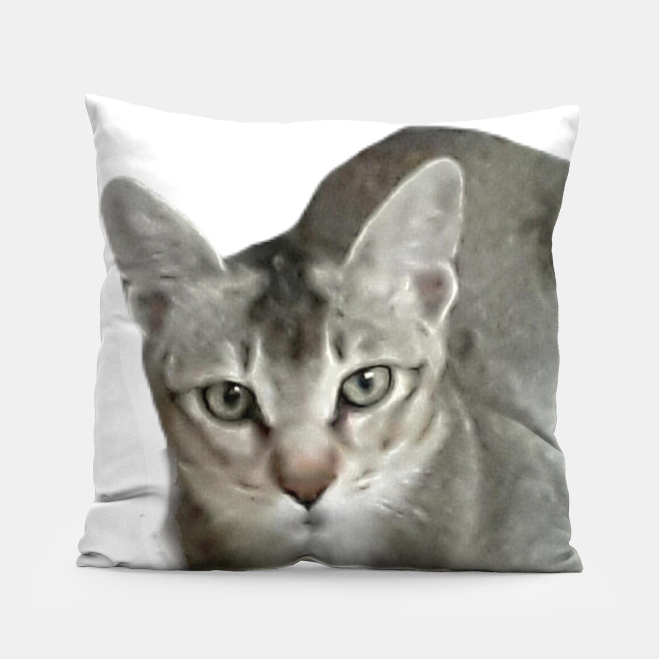 Image of THAT FACE Cute Kitten Abyssinian Pillow - Live Heroes