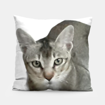 Thumbnail image of THAT FACE Cute Kitten Abyssinian Pillow, Live Heroes