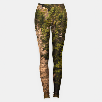 Thumbnail image of Old spruce tree standing proud Leggings, Live Heroes